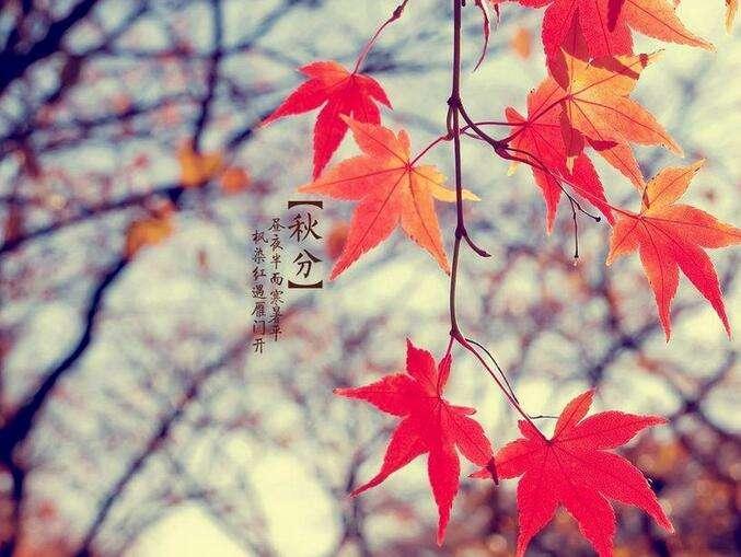 【节气】今天秋分,这几句说到心坎里去了